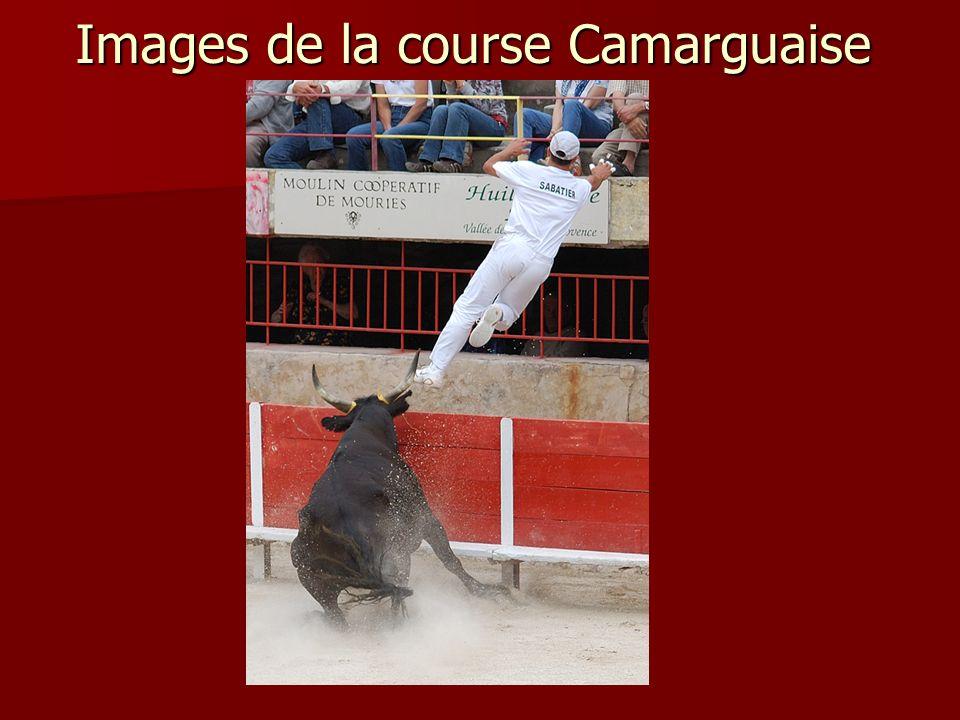 Images de la course Camarguaise