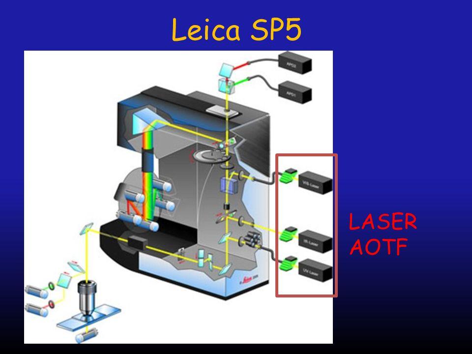 Leica SP5 LASER AOTF