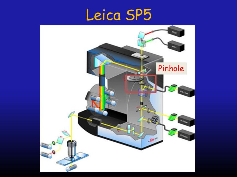 Leica SP5 Pinhole