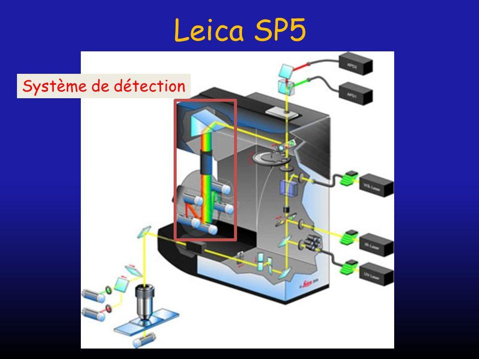 Leica SP5 Système de détection
