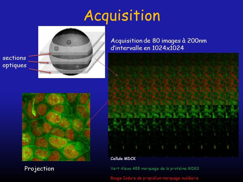 Acquisition Acquisition de 80 images à 200nm d'intervalle en 1024x1024
