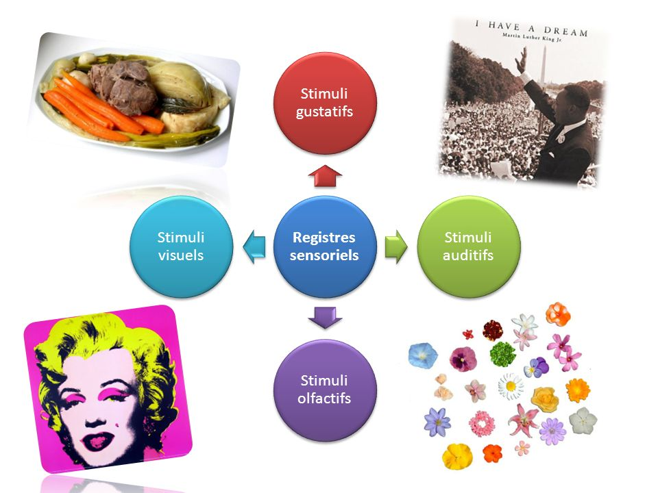 Registres sensoriels Stimuli gustatifs Stimuli auditifs Stimuli olfactifs Stimuli visuels