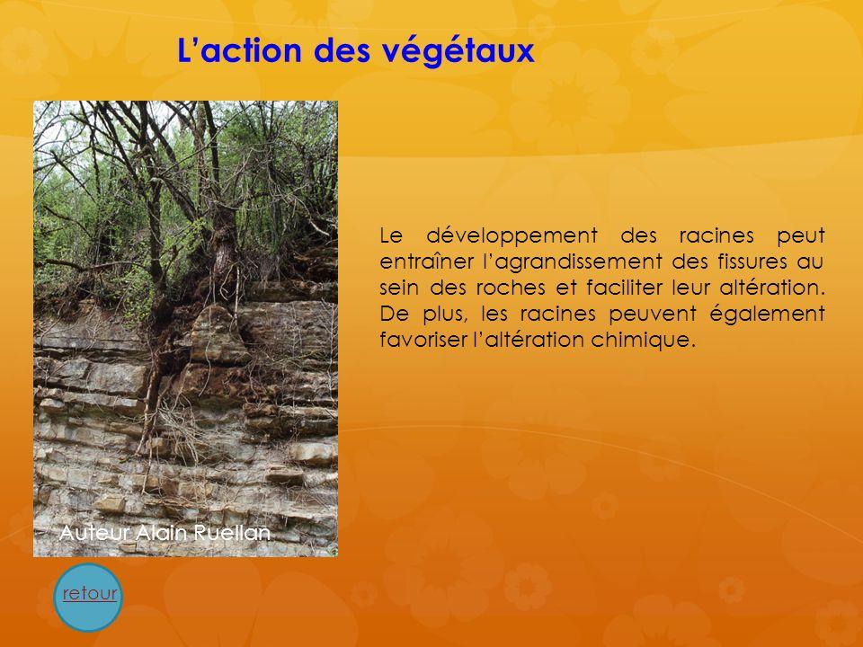 L'action des végétaux