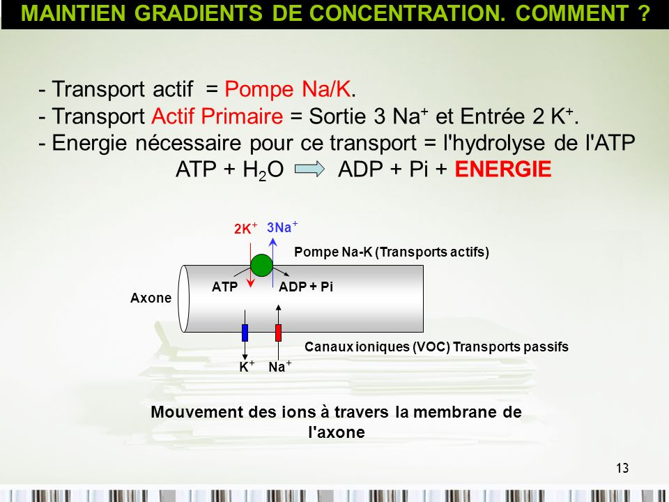 MAINTIEN GRADIENTS DE CONCENTRATION. COMMENT