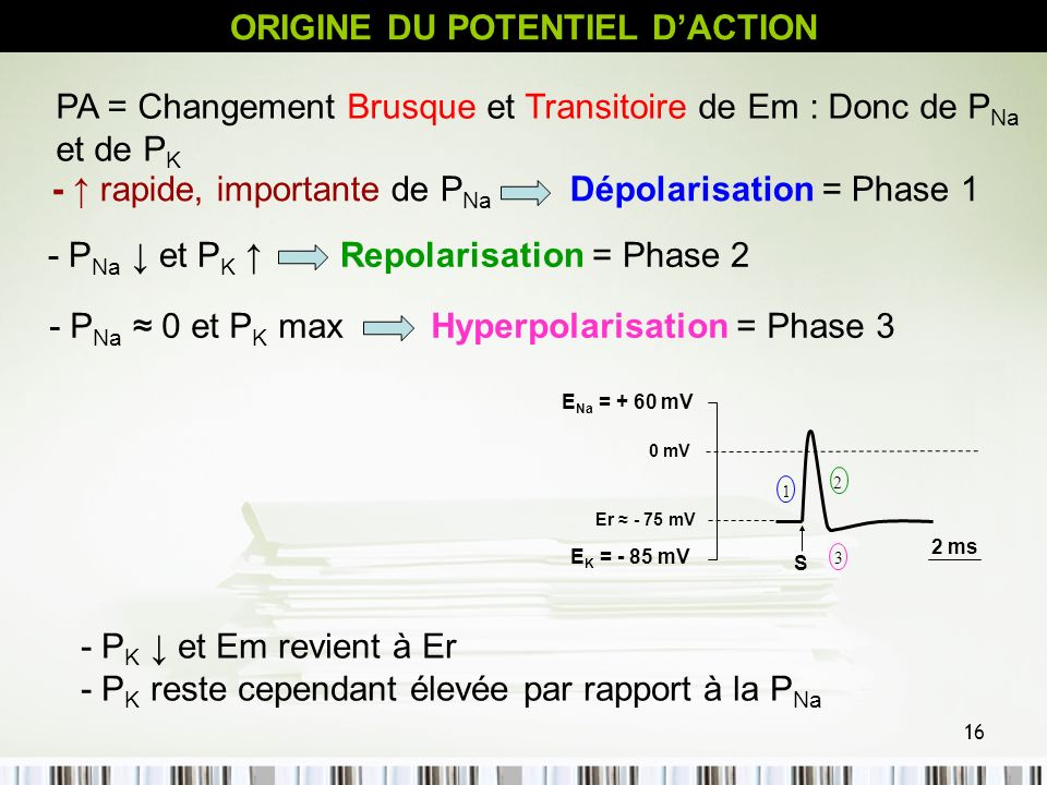 ORIGINE DU POTENTIEL D'ACTION