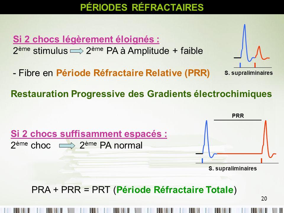 PÉRIODES RÉFRACTAIRES