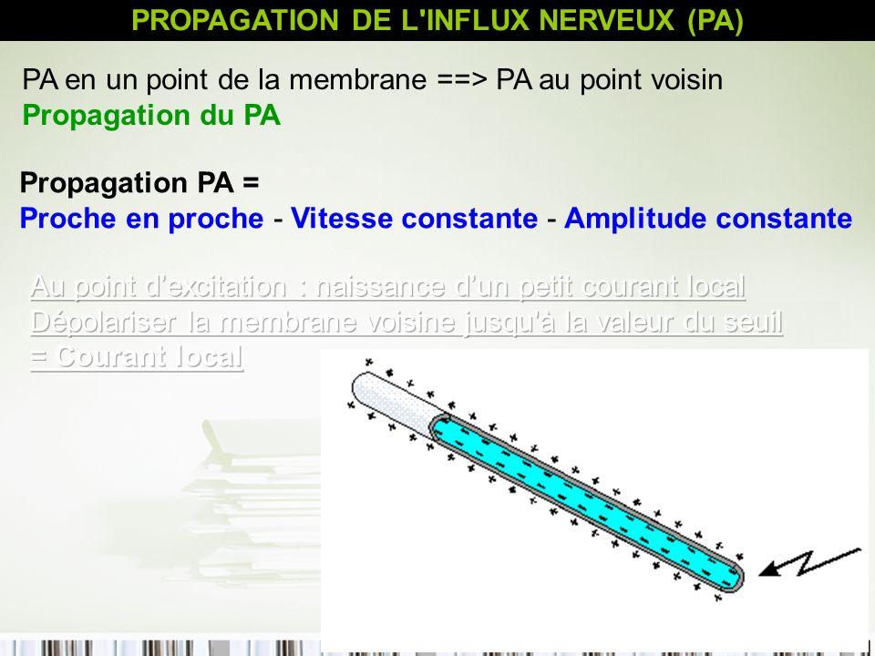 PROPAGATION DE L INFLUX NERVEUX (PA)