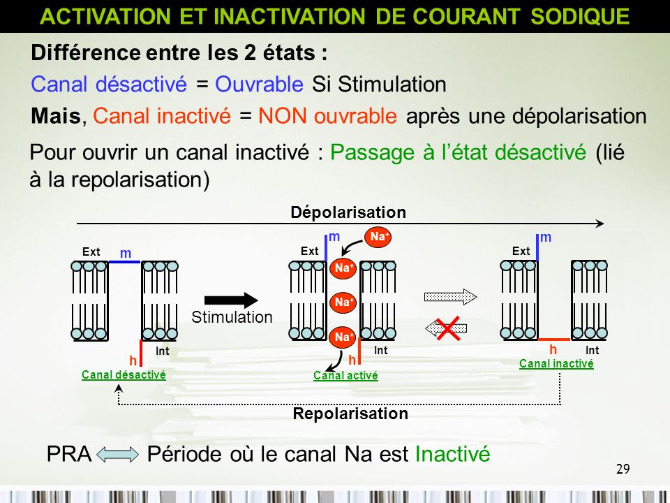 ACTIVATION ET INACTIVATION DE COURANT SODIQUE