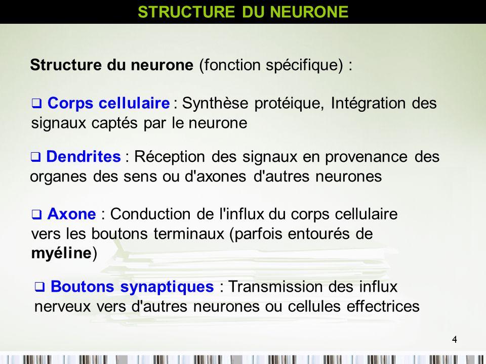 STRUCTURE DU NEURONE Structure du neurone (fonction spécifique) :