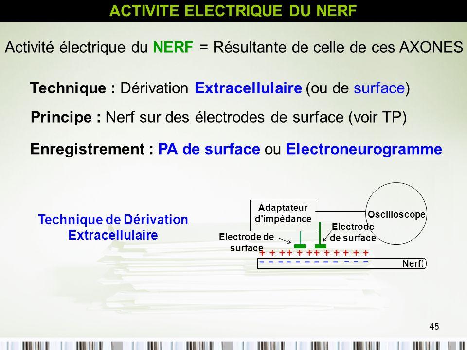 ACTIVITE ELECTRIQUE DU NERF
