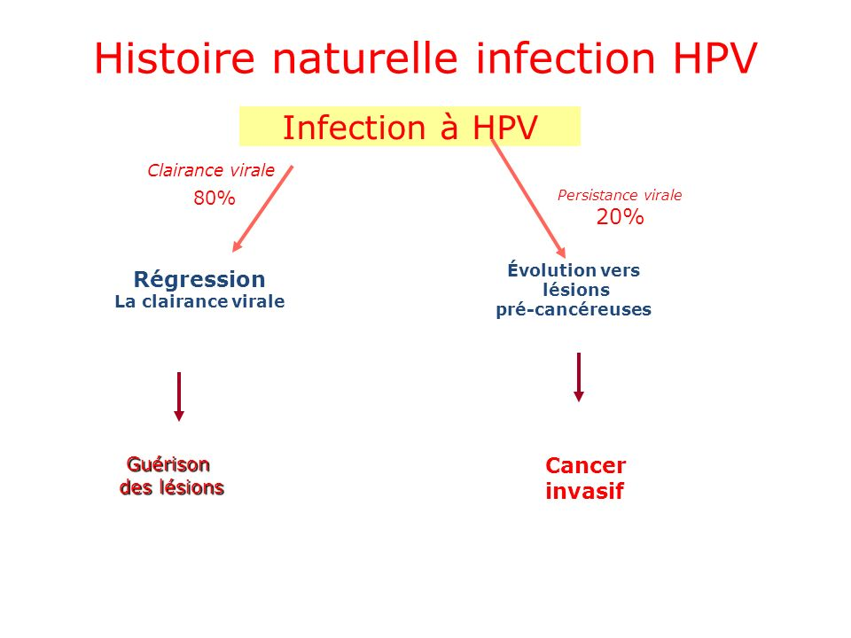 Histoire naturelle infection HPV