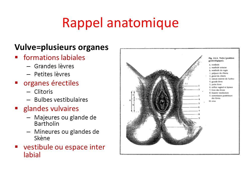 Rappel anatomique Vulve=plusieurs organes formations labiales