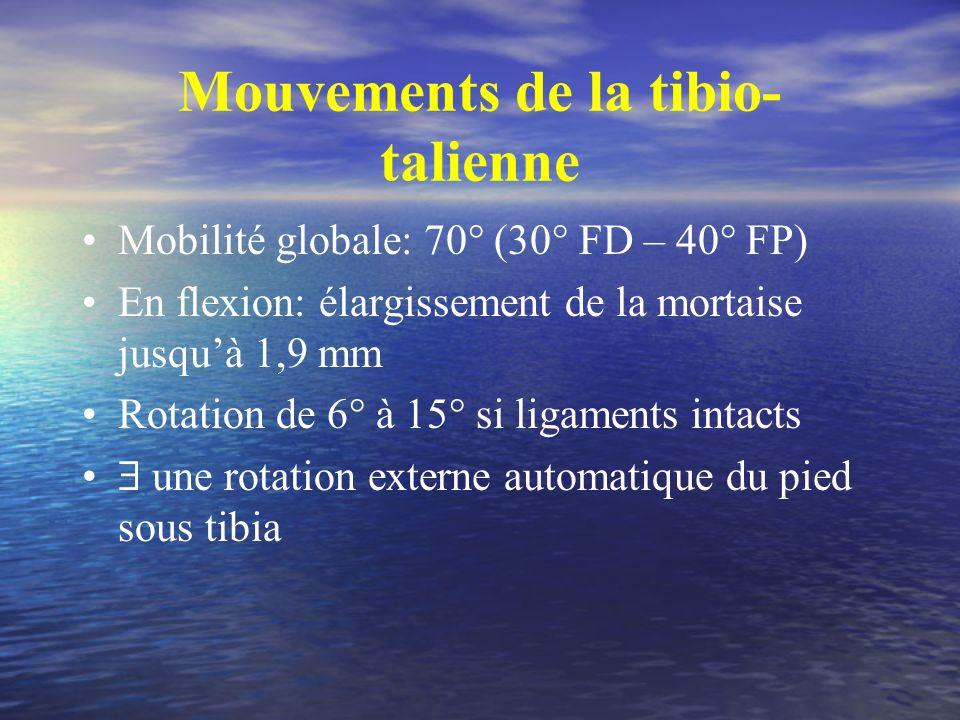 Mouvements de la tibio-talienne