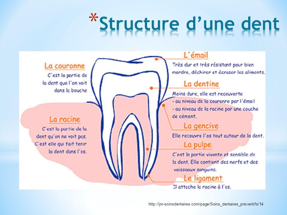 Structure d'une dent http://jnr-soinsdentaires.com/page/Soins_dentaires_preventifs/14