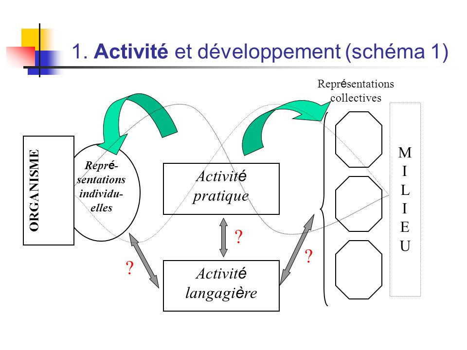 1. Activité et développement (schéma 1)