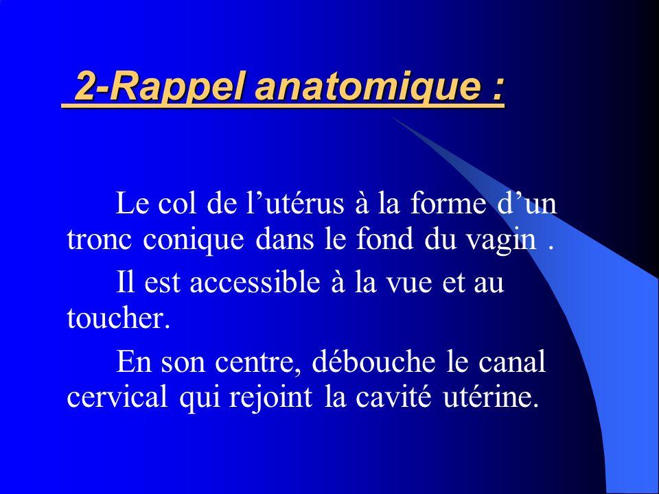 2-Rappel anatomique : Il est accessible à la vue et au toucher.