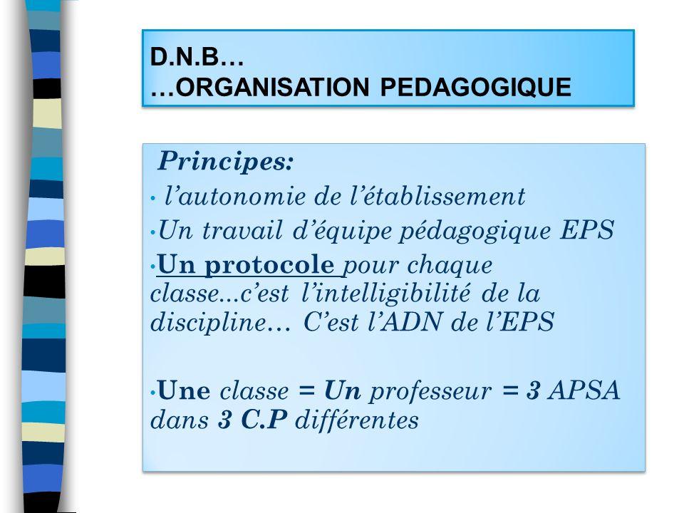 D.N.B… …ORGANISATION PEDAGOGIQUE