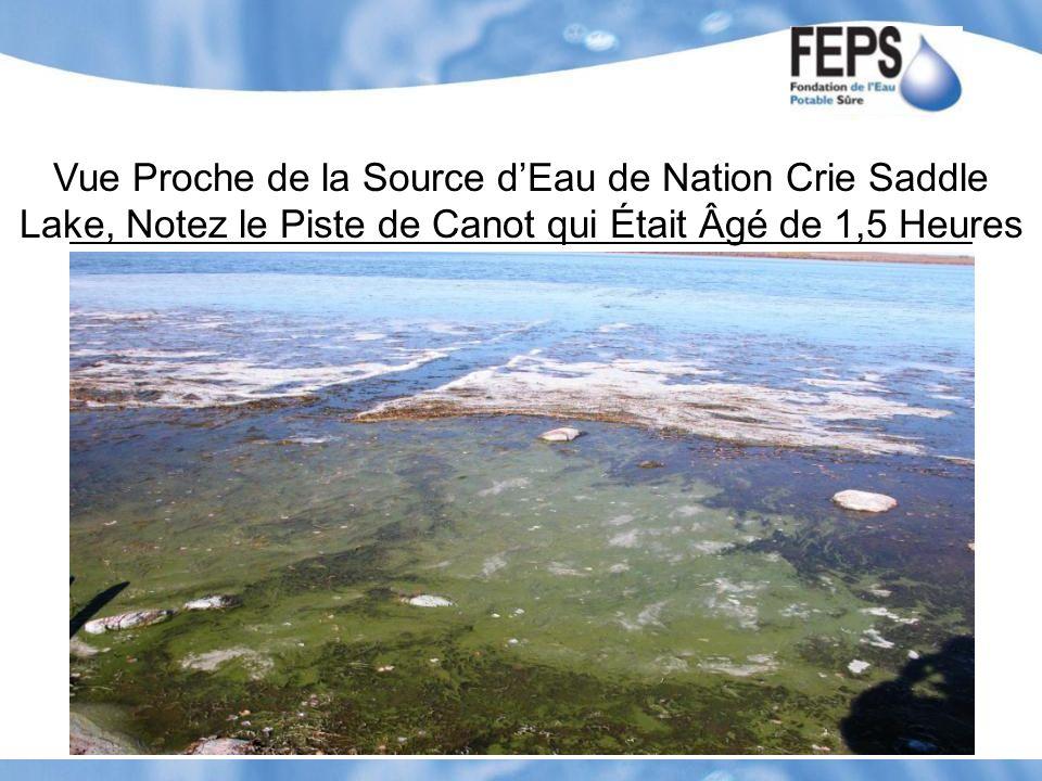 Vue Proche de la Source d'Eau de Nation Crie Saddle Lake, Notez le Piste de Canot qui Était Âgé de 1,5 Heures