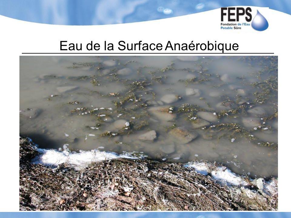 Eau de la Surface Anaérobique