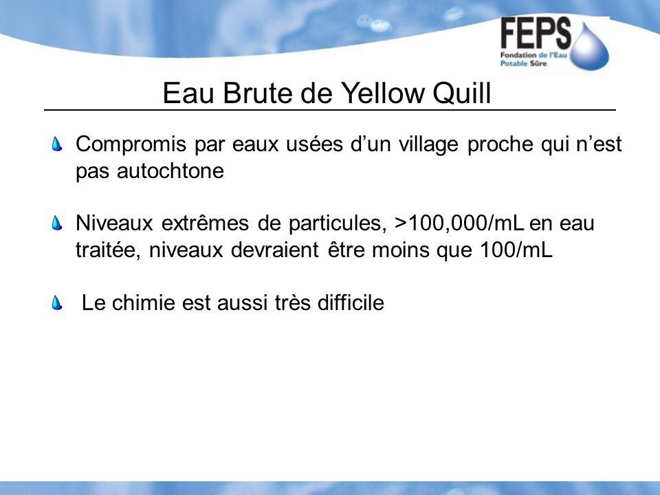 Eau Brute de Yellow Quill