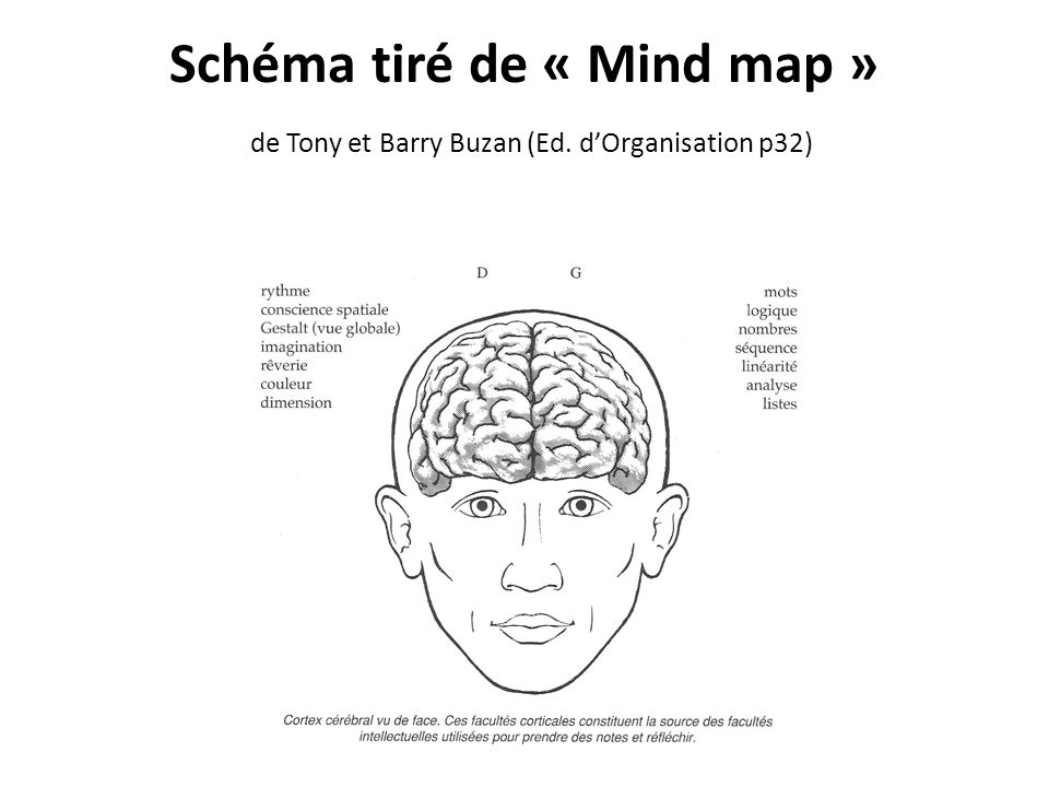 Schéma tiré de « Mind map » de Tony et Barry Buzan (Ed