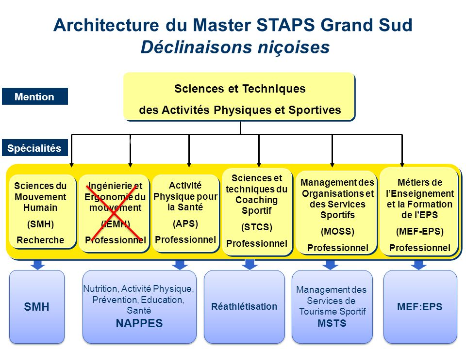 Architecture du Master STAPS Grand Sud Déclinaisons niçoises