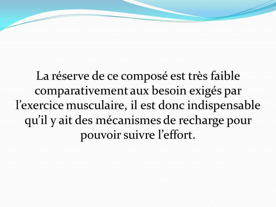 La réserve de ce composé est très faible comparativement aux besoin exigés par l'exercice musculaire, il est donc indispensable qu'il y ait des mécanismes de recharge pour pouvoir suivre l'effort.