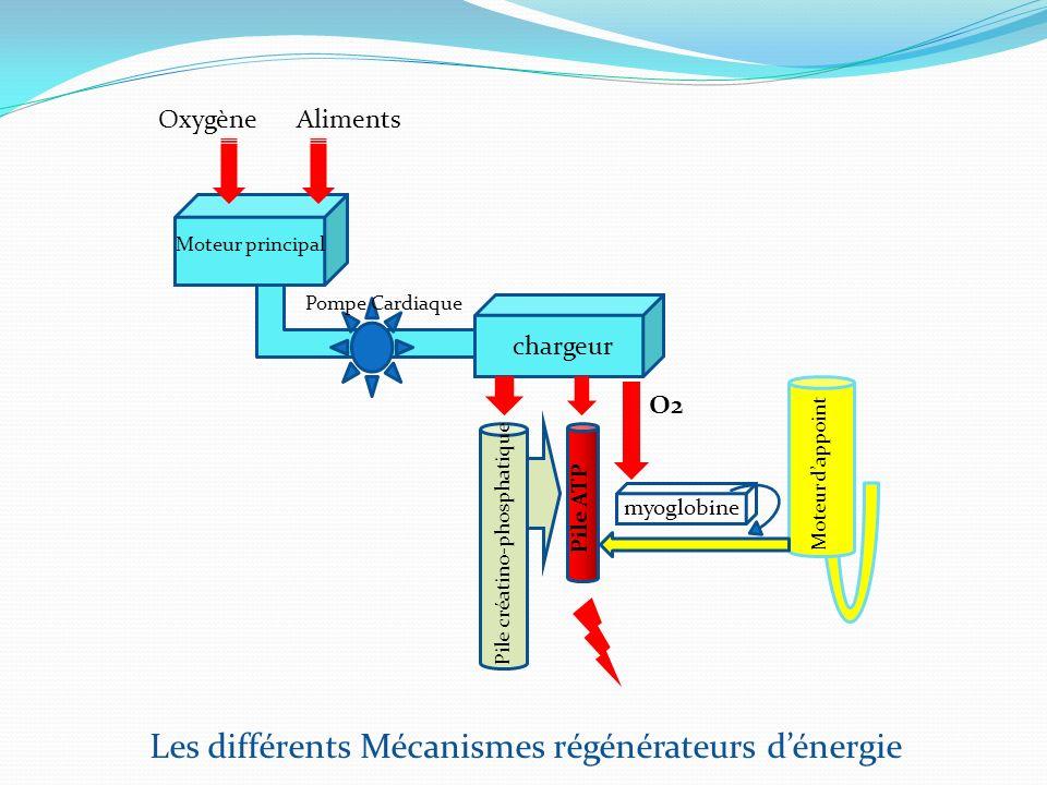 Les différents Mécanismes régénérateurs d'énergie