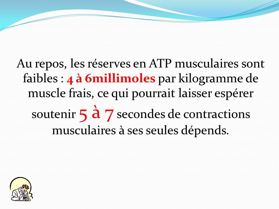 Au repos, les réserves en ATP musculaires sont faibles : 4 à 6millimoles par kilogramme de muscle frais, ce qui pourrait laisser espérer soutenir 5 à 7 secondes de contractions musculaires à ses seules dépends.