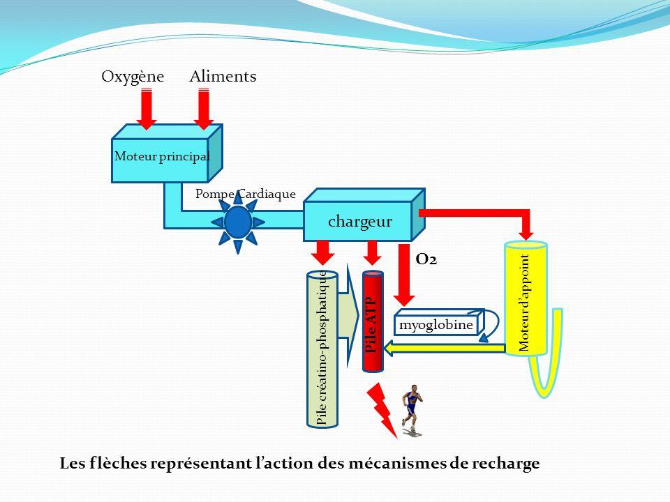 Les flèches représentant l'action des mécanismes de recharge