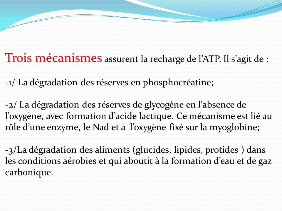 Trois mécanismes assurent la recharge de l'ATP. Il s'agit de :