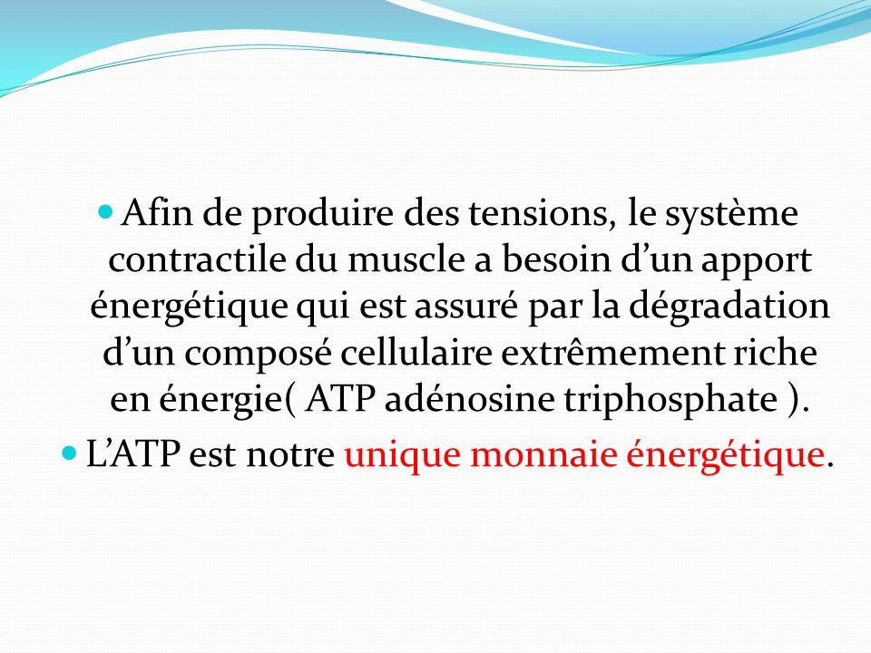 L'ATP est notre unique monnaie énergétique.