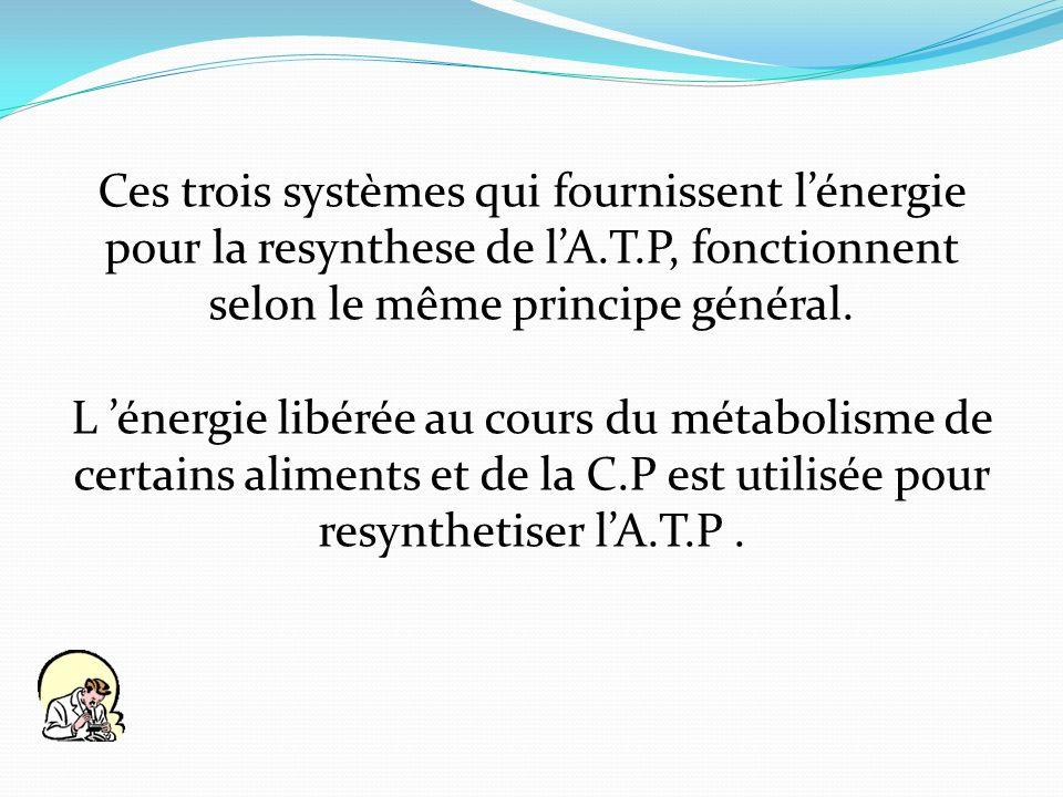 Ces trois systèmes qui fournissent l'énergie pour la resynthese de l'A