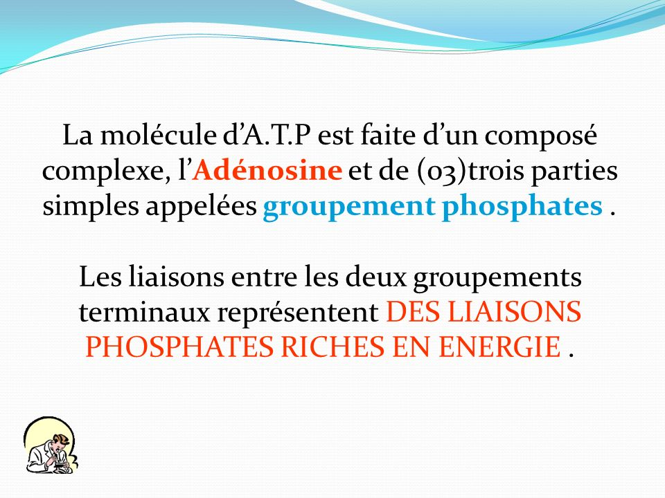 La molécule d'A.T.P est faite d'un composé complexe, l'Adénosine et de (03)trois parties simples appelées groupement phosphates .