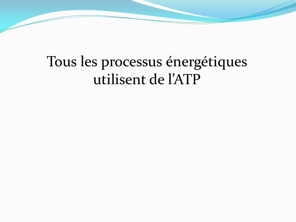 Tous les processus énergétiques utilisent de l'ATP