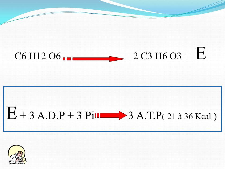 C6 H12 O6 2 C3 H6 O3 + E E + 3 A.D.P + 3 Pi 3 A.T.P( 21 à 36 Kcal )