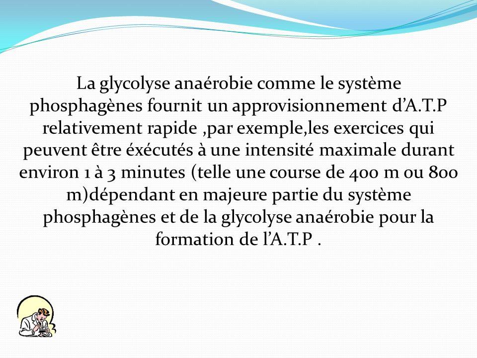 La glycolyse anaérobie comme le système phosphagènes fournit un approvisionnement d'A.T.P relativement rapide ,par exemple,les exercices qui peuvent être éxécutés à une intensité maximale durant environ 1 à 3 minutes (telle une course de 400 m ou 800 m)dépendant en majeure partie du système phosphagènes et de la glycolyse anaérobie pour la formation de l'A.T.P .