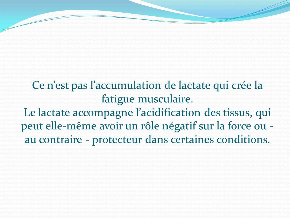 Ce n'est pas l'accumulation de lactate qui crée la fatigue musculaire.