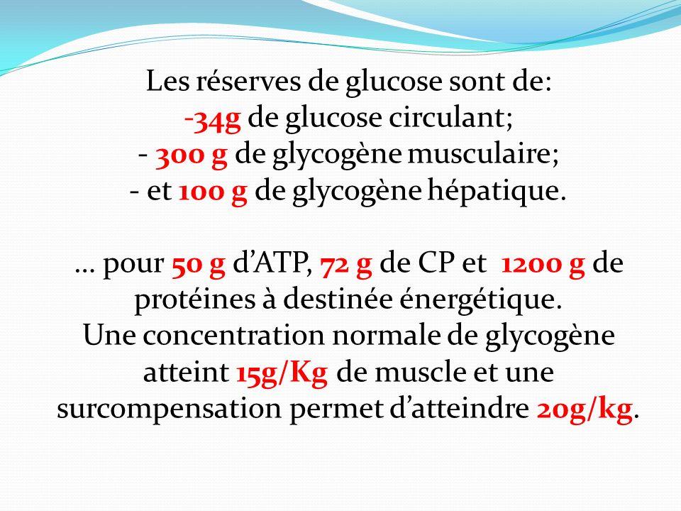Les réserves de glucose sont de: 34g de glucose circulant;