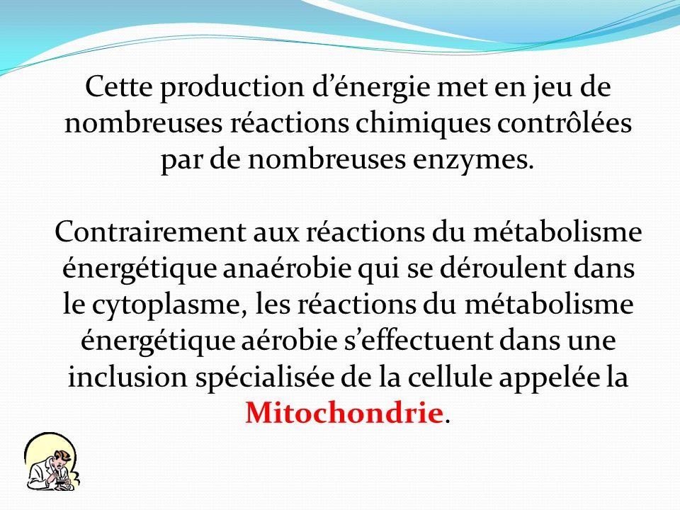 Cette production d'énergie met en jeu de nombreuses réactions chimiques contrôlées par de nombreuses enzymes.
