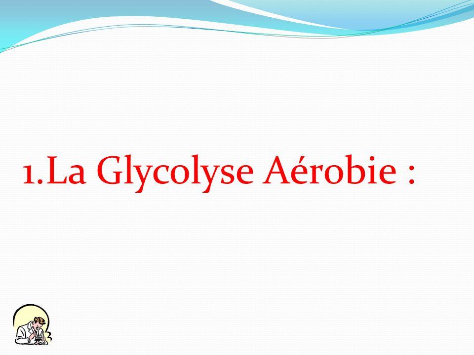 La Glycolyse Aérobie :