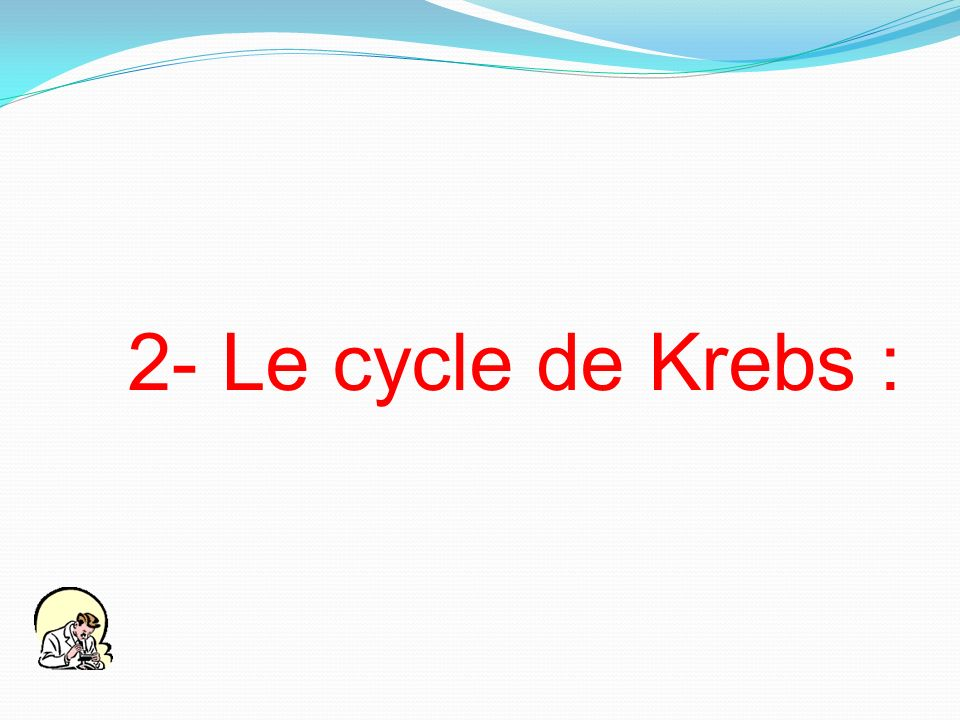 2- Le cycle de Krebs :