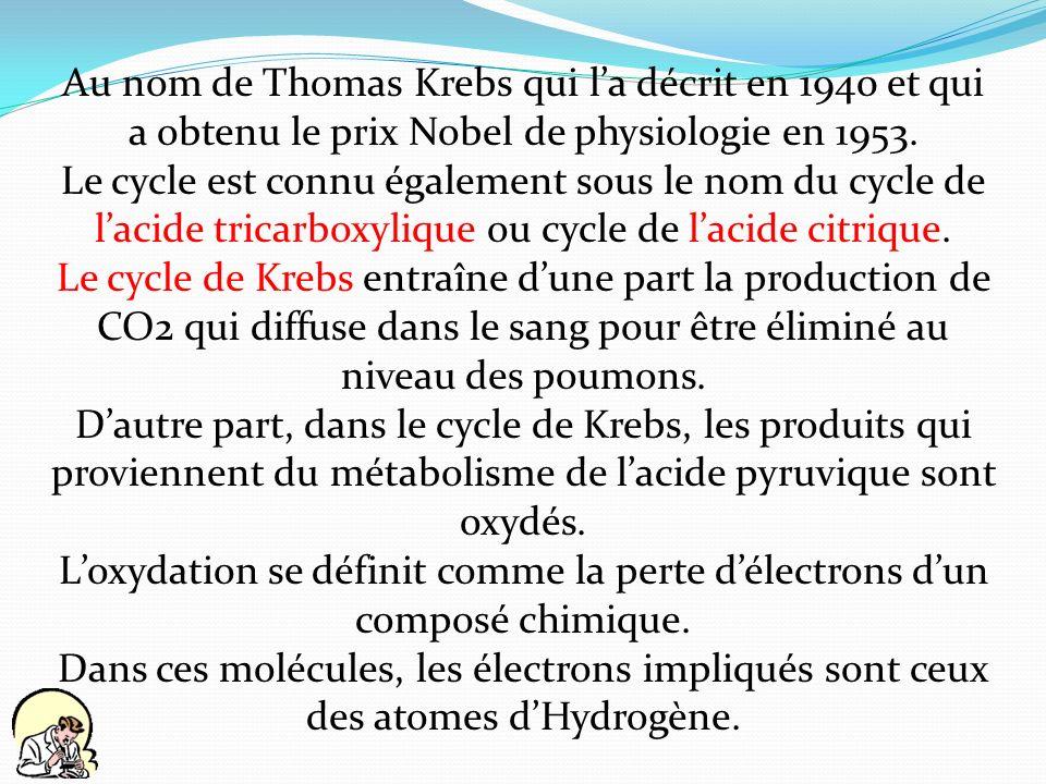 Au nom de Thomas Krebs qui l'a décrit en 1940 et qui a obtenu le prix Nobel de physiologie en 1953.
