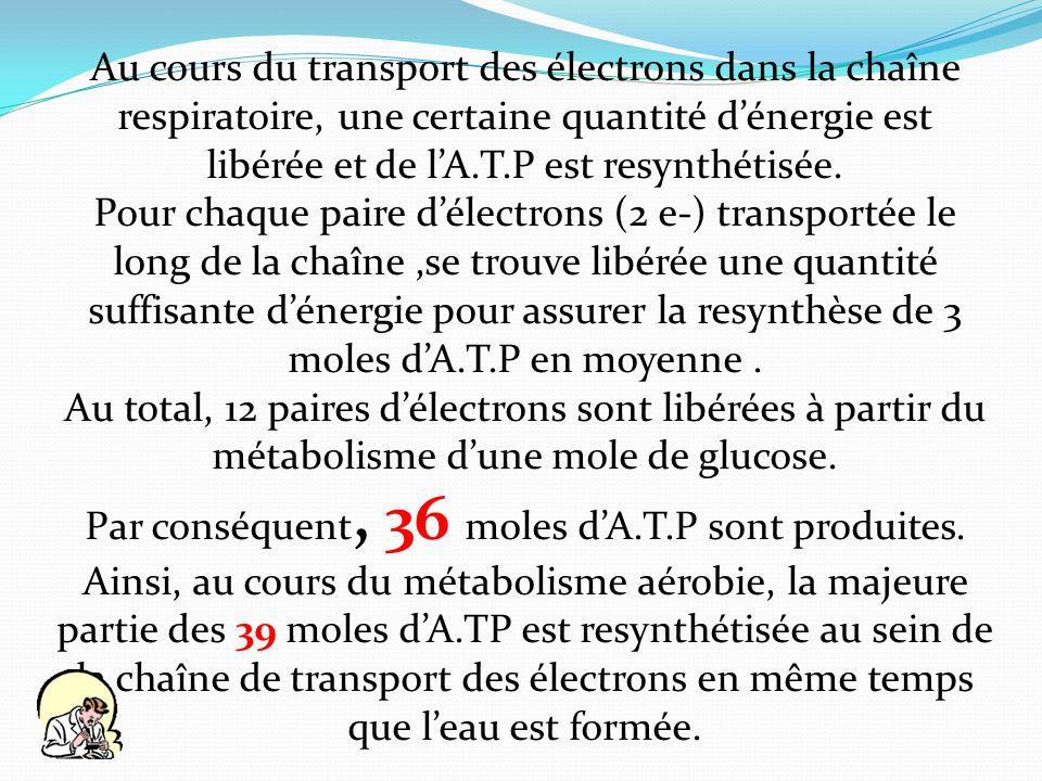 Par conséquent, 36 moles d'A.T.P sont produites.