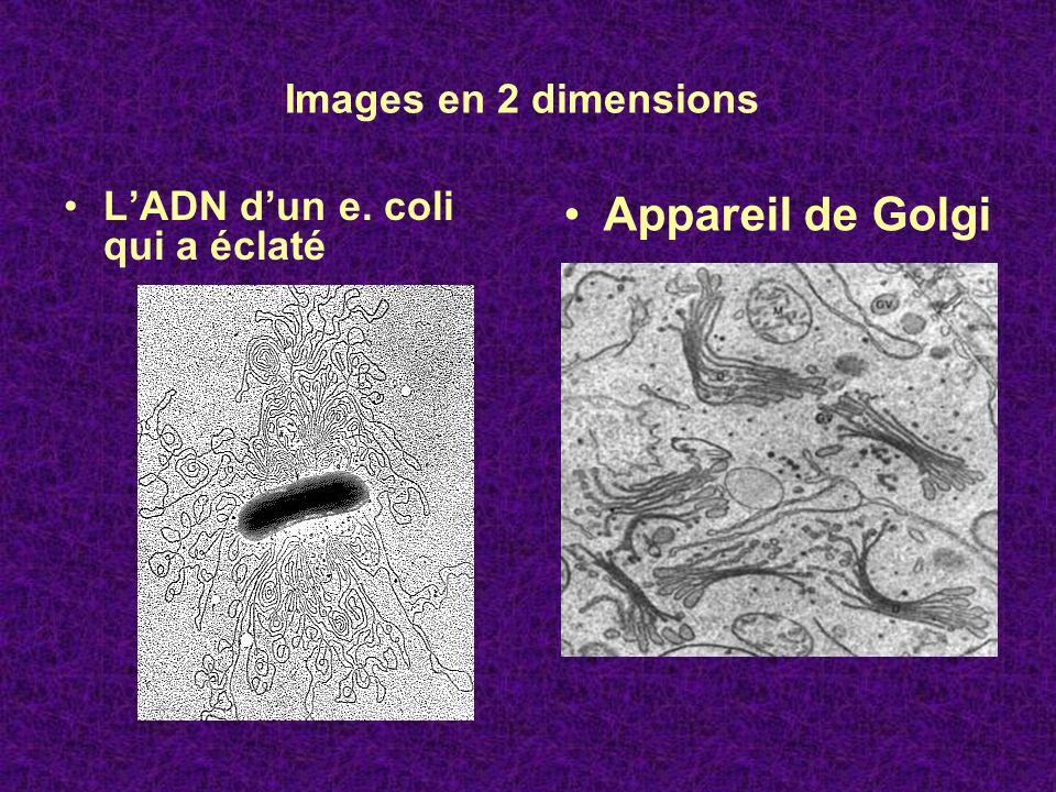 Appareil de Golgi Images en 2 dimensions