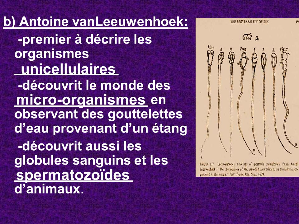 unicellulaires micro-organismes spermatozoïdes
