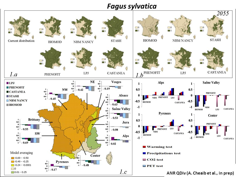 Fagus sylvatica ANR QDiv (A. Cheaib et al., in prep)
