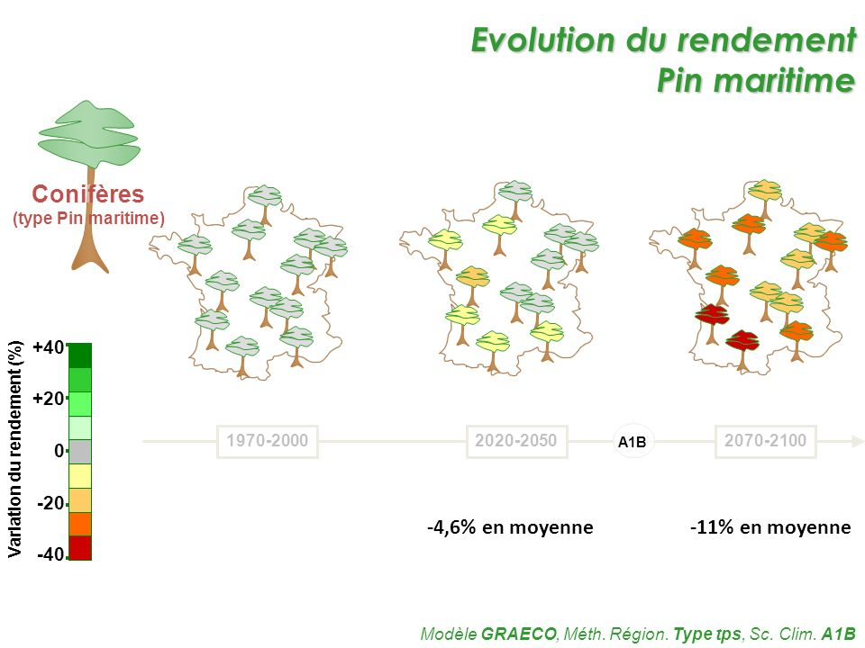 Evolution du rendement Pin maritime