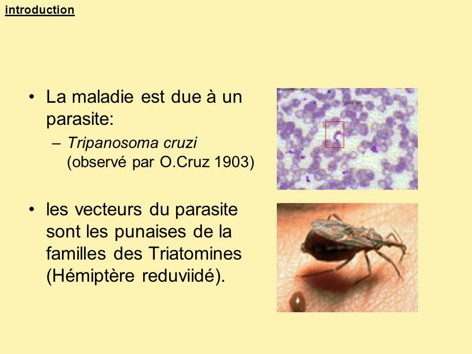 La maladie est due à un parasite: