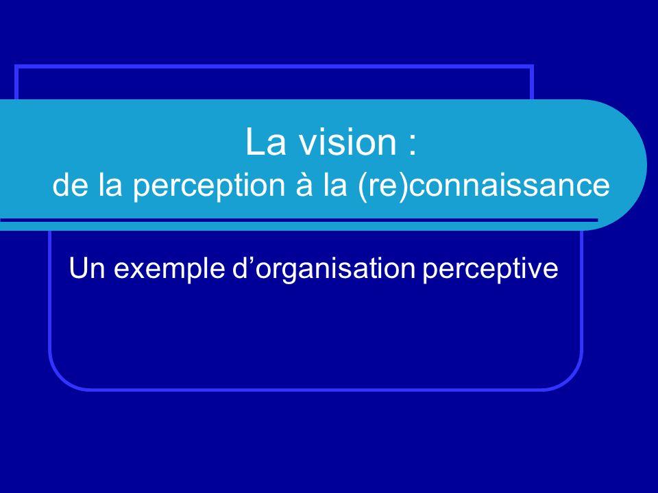La vision : de la perception à la (re)connaissance